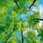 Ağaç-112